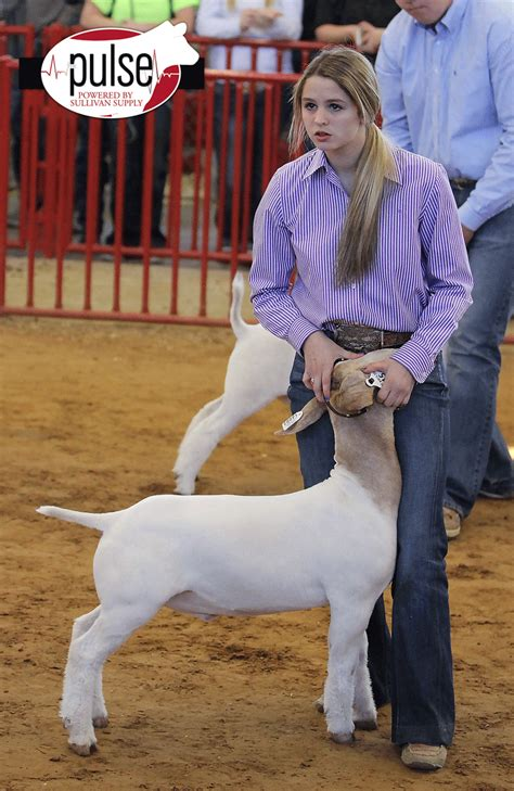 Fort Worth Stock Show | Junior Market Goats | The Pulse