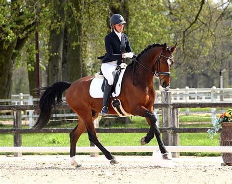 French Horses To Begin Campaign for 2019 WCYH Team Selection