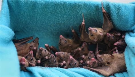 Ebola-like virus found in Chinese bats   South China